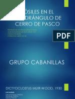 FÓSILES EN EL CUADRÁNGULO DE CERRO DE PASCO (3).pptx