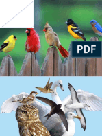 Parts of the Bird
