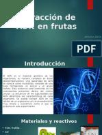 Extracción de ADN en Frutas