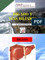 8. clade Hígado