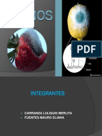 Diapositivas de Mohos Para Exponer