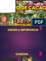 cacao exp