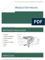 Aparato Reproductor Macho