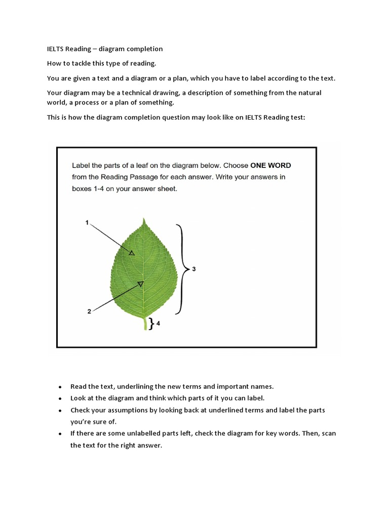 ielts reading diagram completion leaf blank leaf diagram label a leaf diagram #28