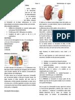 1º tema de nefrologia dr segura ANATOMIA, HISTOLOGIA RENAL.docx