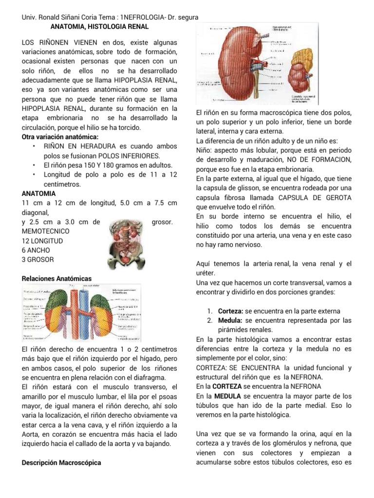 1º tema de nefrologia dr segura ANATOMIA, HISTOLOGIA RENAL.pdf