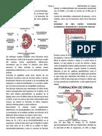 2º tema de nefrologia dr segura FISIOLOGIA RENAL.docx