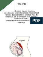 Placenta.odp