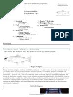 FAO Fisheries & Aquaculture - Programa de Información de Especies Acuáticas - Oncorhynchus Mykiss (Walbaum, 1792)