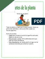 temalaspartesdelasplantas-120706172029-phpapp02