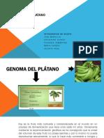 Genoma Del Platano Diapositiva