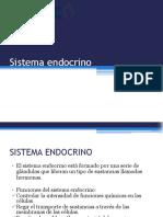 17. Sistema endocrino(1).pdf