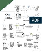 Protocolo Extraccion 1er Dia Inggenetica