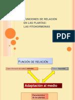 Fitohormonas Movimientos Enplantas 120330101228 Phpapp02
