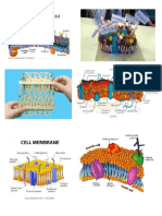 Cell Membrane Picture