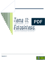 Tema 11 Fotosíntesis.pdf