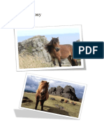 dartmoor pony booklet