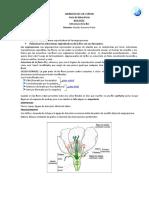 Estructura de La Flor1