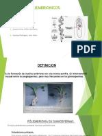 Embriones Poliembrionicos Propagacion de Plantas (1)