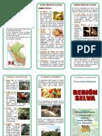 Region Selva