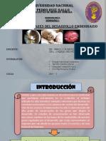 SEMINARIO-I-BASES-MOLECULARES-DEL-DESARROLLO-EMBRIONARIO-2016.pptx