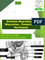 Clase 2 Sistemas Reproductores