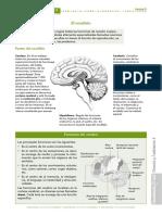 Sistema Nervioso Ficha Inform.