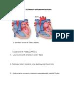 Guía Sistema Circulatorio 5º