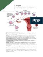 Resumo de Embrio Normal
