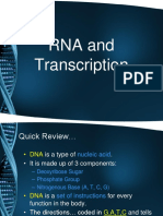 RNA and Transcription Notes