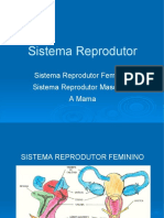 Sistema Reprodutor + MAMA.ppt