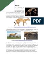 Evolucion Del Caballo
