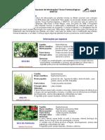 Plantas Tóxicas No Brasil