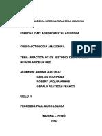 INFORME DE PRACTICA DE ICTIOLOGIA N° 03.docx