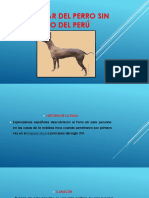Estándar Del Perro Sin Pelo Del Perú