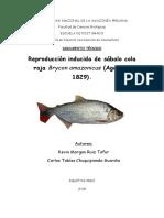 Reproduccion Inducida de Sabalo Cola Roja Brycon Cephalus
