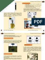 Manual Manzano Revisado