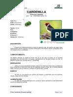 Ficha CARDENILLA _Paroaria Capitata