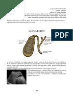 28 - Anatomia II 05-04-2017 R.pdf
