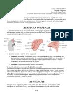 31 - Anatomia II - 27.04.2017 R