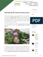 Hierbas de La Noche de San Juan - Preparación e Historia - Jardincelas