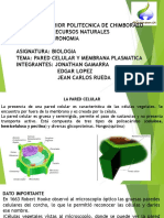 XPOSICIONbiologia Pared Celular MembranaEX