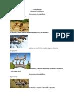 Imágenes de Interacciones Ecológicas