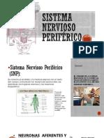 Sistema Nervioso Periferico