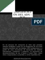 Amplificaciòn Del Adn