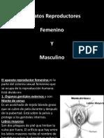 5. Aparatos Reproductores.pptx