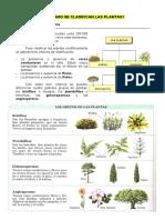 Cómo_se_clasifican_las_plantas.doc