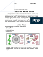 Plant Tissue and Animal Tissue.docx