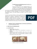 CORREGIDO PREVENCION EN AVES.docx