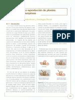 05_Biologia_de_la_Reproduccion_de_Plantas_Aspectos_descriptivos.pdf